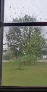 A photo of a window with drops of rain on it with trees in the background. Photo by Dawn Michelle Michals www.dawnmichellemichals.com